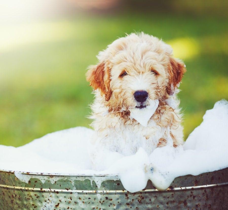 Bathing Your Pet